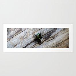 Bush Fly Art Print