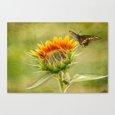 Yang Sunflower Canvas Print