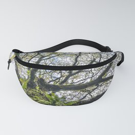 Centenary oak with the trunk covered in moss and green plants Fanny Pack