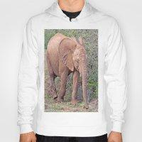 baby elephant Hoodies featuring Baby Elephant by Lynn Bolt