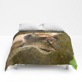Eurasian Lynx Comforters