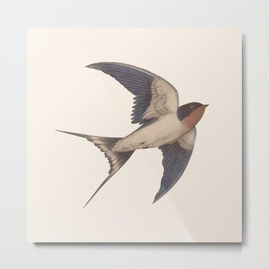 Barn Swallow Metal Print