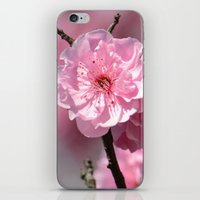 cherry blossoms iPhone & iPod Skins featuring Cherry Blossoms by Zen and Chic