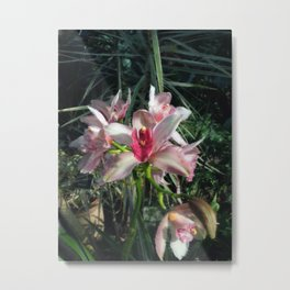 Inspiration Orchids  Metal Print