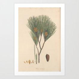Botanical Pine Art Print