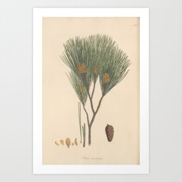 Botanical Pine Art Print