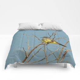 Bird - Western Kingbird - Study 1 Comforters