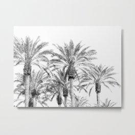 California Palm Trees, Black & White Metal Print