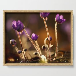 Hepaticas in The Glare Of The Sun #decor #society6 Serving Tray