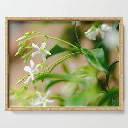 Chinese star jasmine flowers Serving Tray