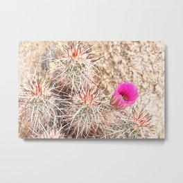 Prickly Pink Metal Print