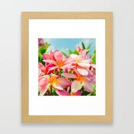 Pua Melia ke Aloha Maui Framed Art Print