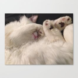 Milo's toe beans Canvas Print