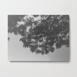 Black & White Trees Metal Print