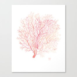 Red coral sea fan Canvas Print