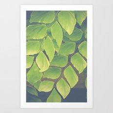Fern Abstract Art Print