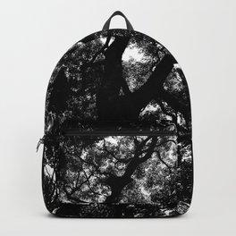 Camphor Canopy Backpack