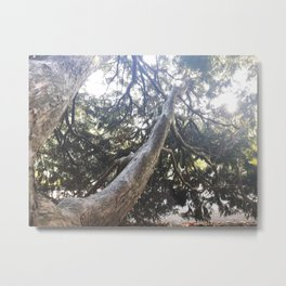 Trapped in treebranches Metal Print
