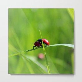 Beetles love Metal Print