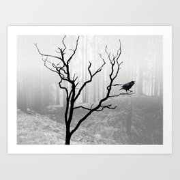 Black Crow in Foggy Forest A118 Art Print