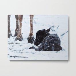 Baby Reindeer In Snow Metal Print