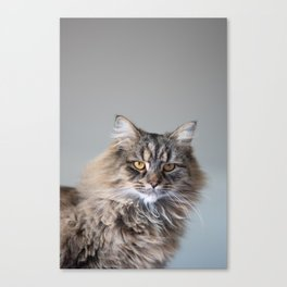 Royal Tom cat : Look into my eyes Canvas Print