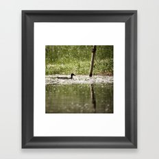 Aquatic wanderer Framed Art Print