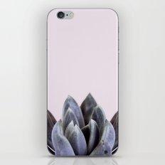 pink succulent cactus iPhone Skin