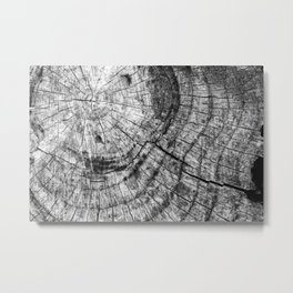 Tree Rings Metal Print