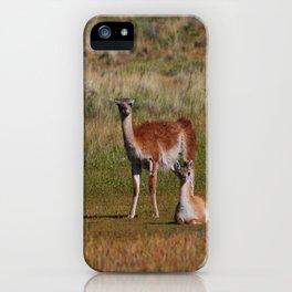 Guanaco family iPhone Case