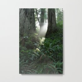 WestCoast Rainforest Metal Print