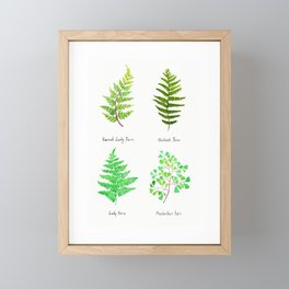fern collection watercolor Framed Mini Art Print