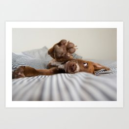 Puppy Reaching with Paw Art Print