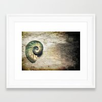 shell Framed Art Prints featuring Shell by KunstFabrik_StaticMovement Manu Jobst