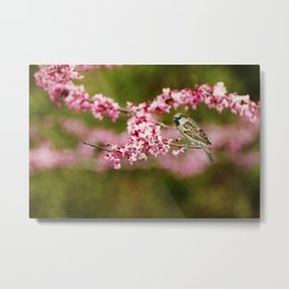 Spring Redbud Metal Print