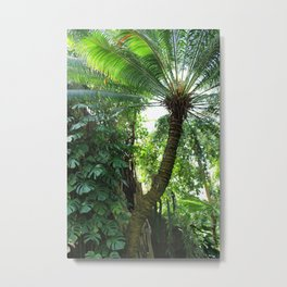 Underside of Palm Tree Metal Print