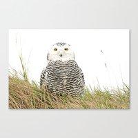 hedwig Canvas Prints featuring Hedwig by Ruurd Jelle van der Leij Highkeyart