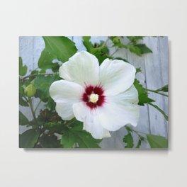 White Hibiscus Flower Ruffle Metal Print