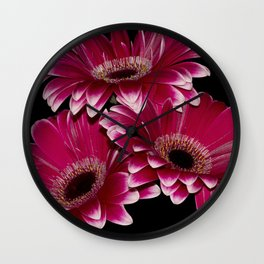 Triple Crown of Red Gerbera Daisys Wall Clock