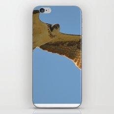 Osprey in Flight iPhone & iPod Skin
