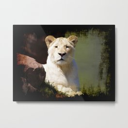 Noble Beast - Rare White Lion Metal Print