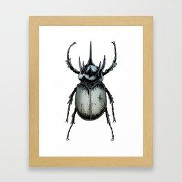 Chalcosoma Framed Art Print