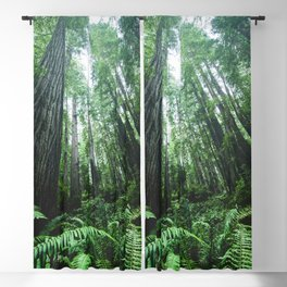 Redwood National Park- Pacific Northwest Nature Photography Blackout Curtain