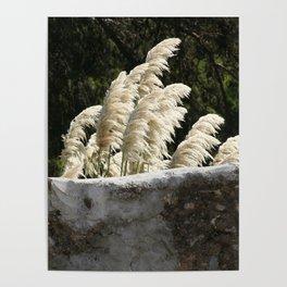 Flowering Pampas Grass Plumes Poster
