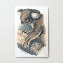 Koala bear in the forest of Australia Metal Print