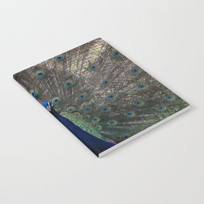 Show off Notebook