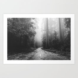 Redwood Forest Adventure Black and White - Nature Photography Art Print