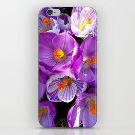 flowering crocuses iPhone Skin