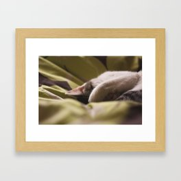 snooze Framed Art Print