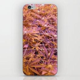 weed plants iPhone Skin